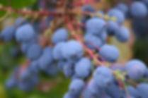 berries-1541356_640.jpg