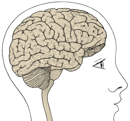 Brainery mozog