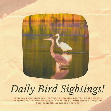 Daily Bird sightings (1).png