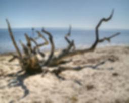 Driftwood on a Beach