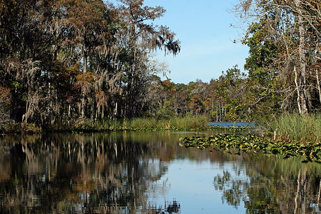 Calm Waters and Trees of the Suwannee River