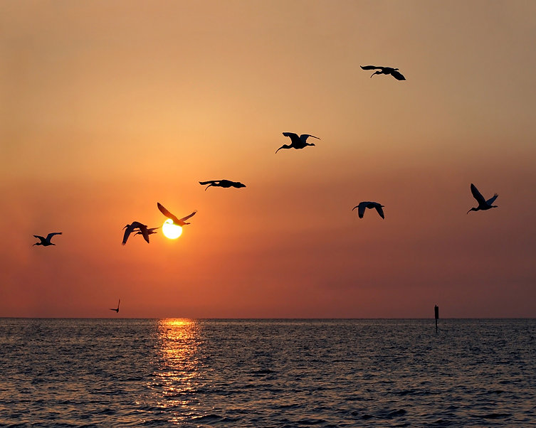 Birds Silhouetted Against Sunset.jpg
