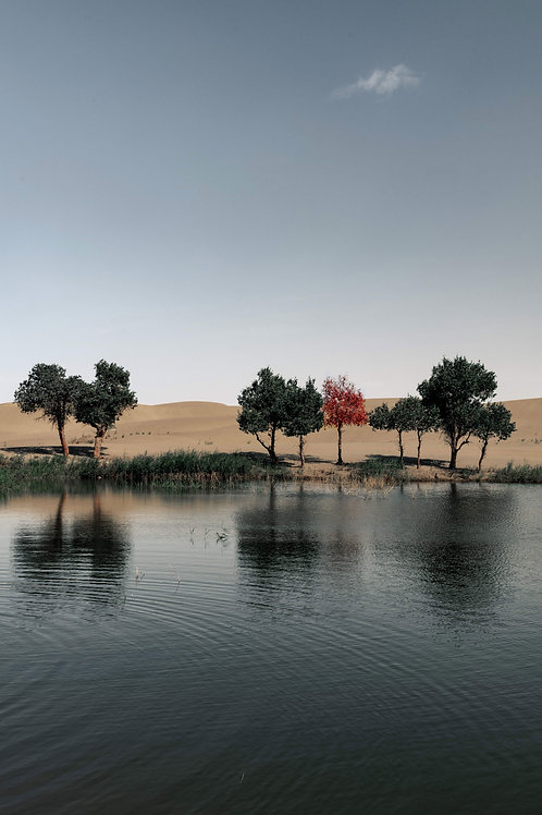 A Lake in the Dessert