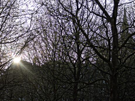 Soleil entre les arbres