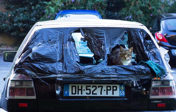Voiture à chat