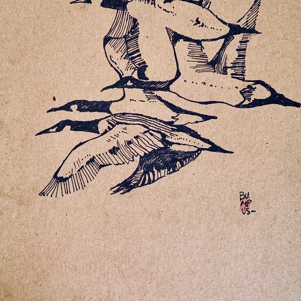 Geese Sketch
