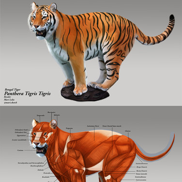 Animal Anatomy Class