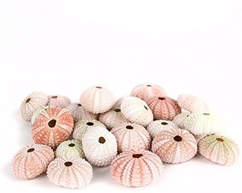 Pink Sea Urchin Shells