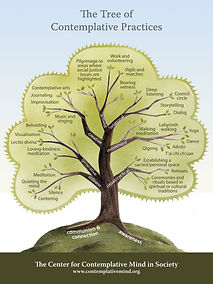 The tree of contemplative practices.jpg