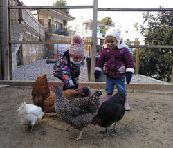 Les gallines