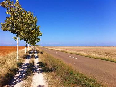 Camino frances, la meseta à perte de vue