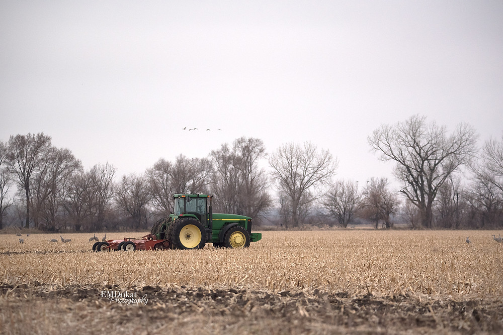 tractor in field as sandhill cranes fly above skyline in central Nebraska