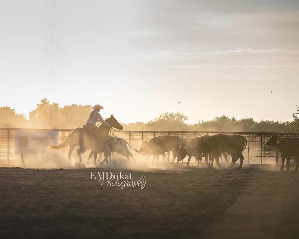 dusty cowgirl & horse sorting cattle in Elkhorn, NE