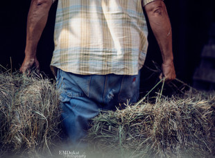 Baling Hay, A Collection by EMDukat Photography