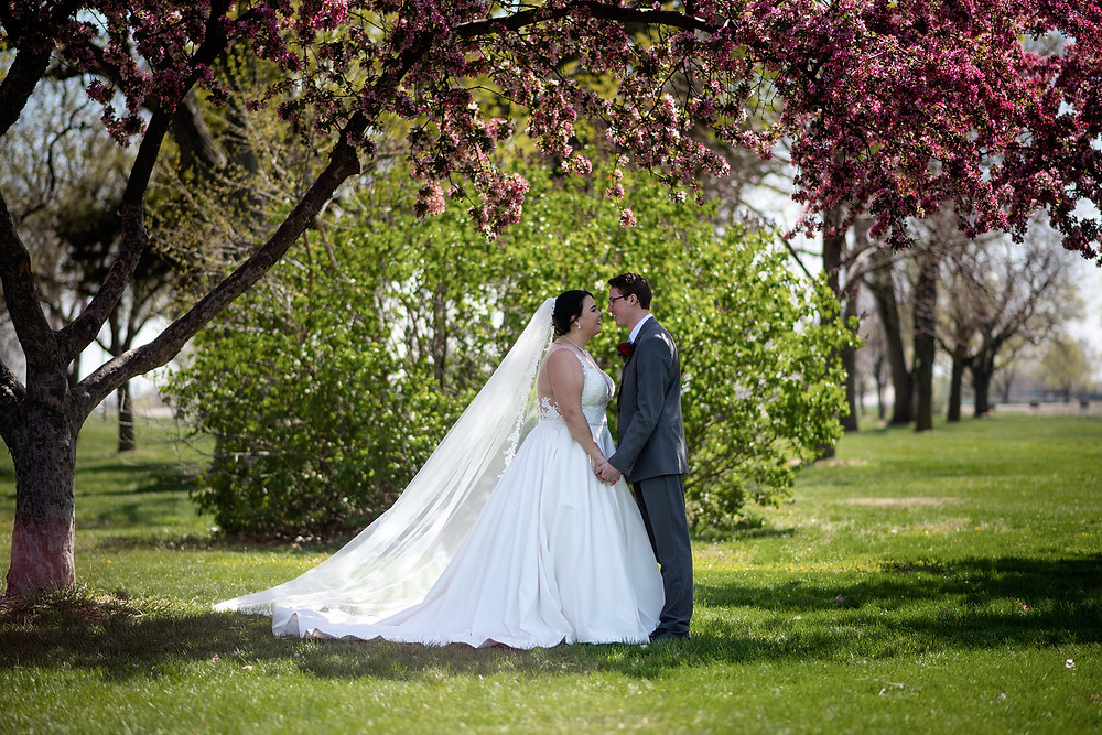 bride with long veil and train holds hands with her groom under a blooming cherry tree in Lincoln, Nebraska.