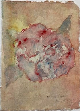 Jims Camellia.jpg