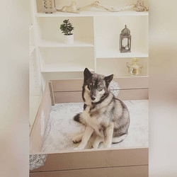 Lyka in her whelping box 2018