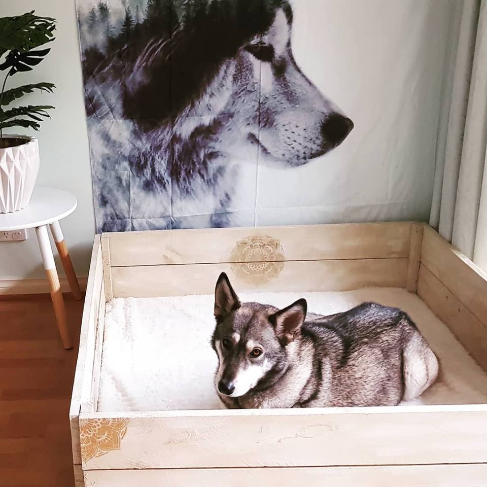 Neva in her whelping box 2017