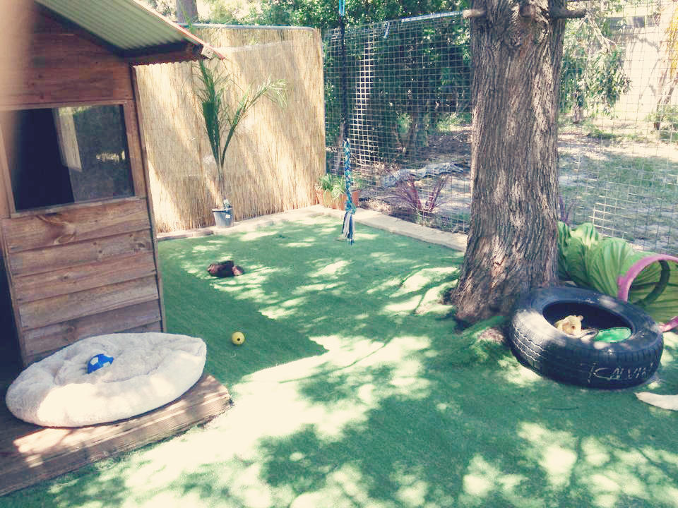 Our 2014 Puppy Enclosure