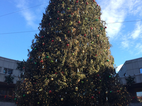 #8 | Die Geschichte des Weihnachtsbaumes - The Story of the Christmas Tree