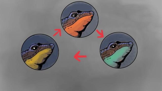 The Lizards That Play Rock-Paper-Scissors