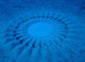 Photo of a pufferfish underwater crop-circle sand art