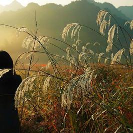 Xiaomu Feng