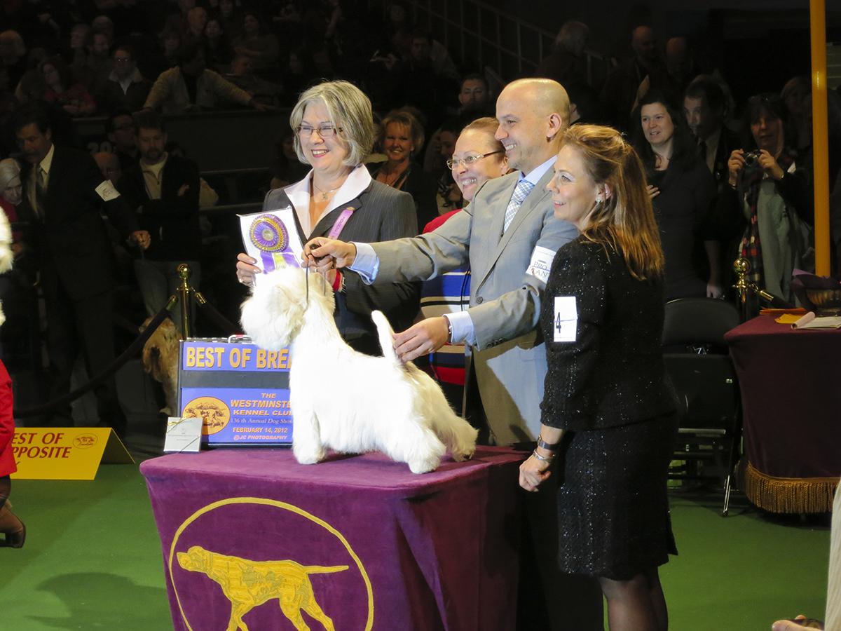 Dog Shows / Skyehigh Kennels/ Westies