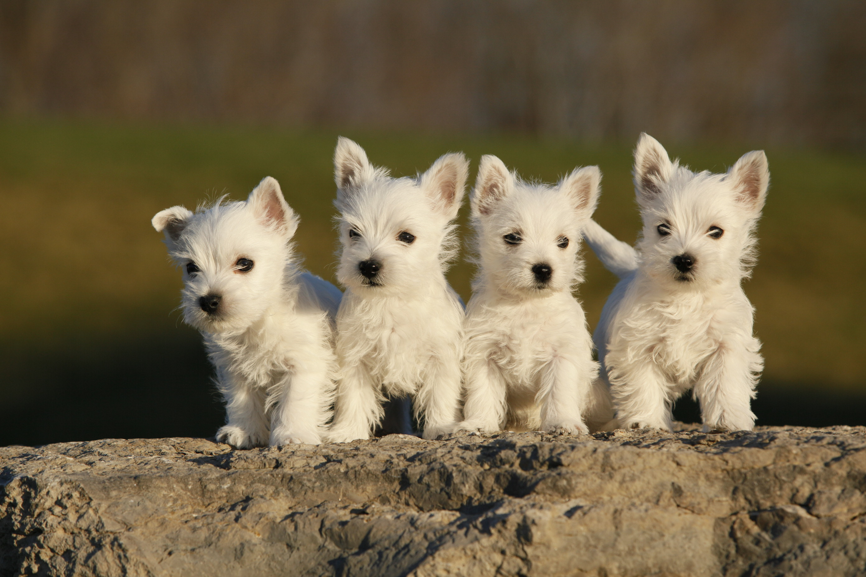Puppies on the Rocks