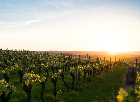 New warning for wine on climate threat