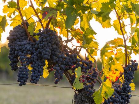 Oil and gas magnate finalises largest Bordeaux vineyard sale of 2019