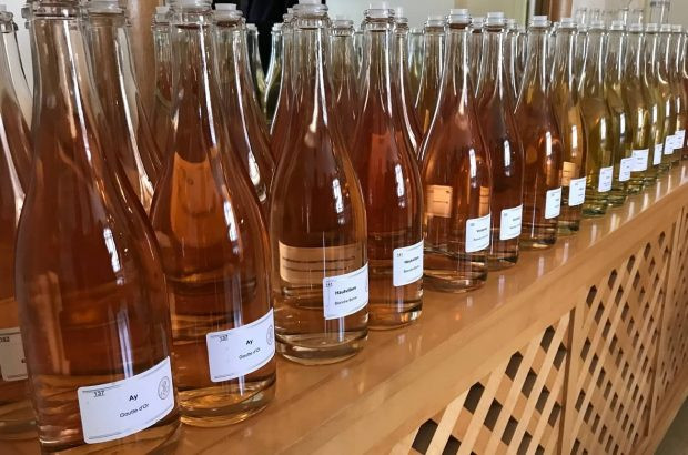 2018 vintage 'vins clairs', or base wines at Louis Roederer