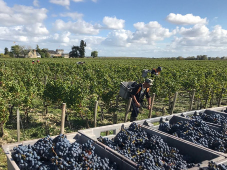 Bordeaux 2019 weather and harvest report