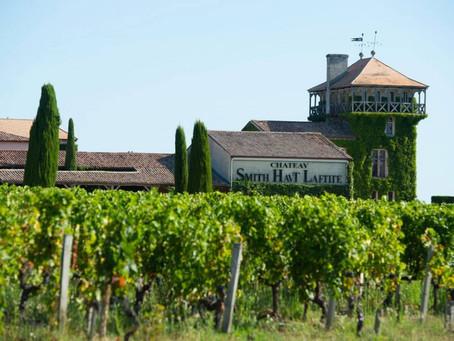 High hopes as Bordeaux 2019 white wine harvest starts