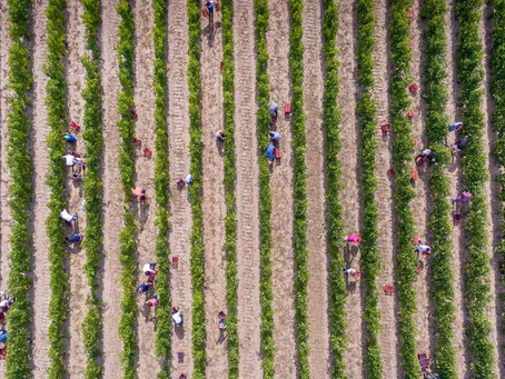 Why we need ethical fine wine