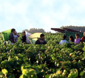 Chateau Lafite CEO sees 'positive' side of climate change