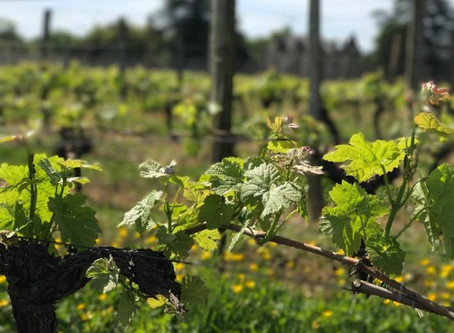 Fine Wine Investment: Calm Before The Storm?