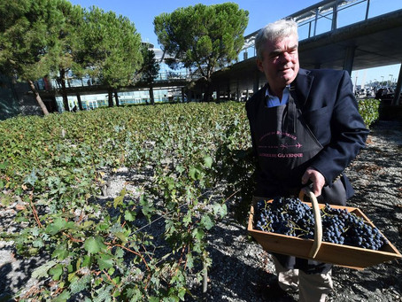 Bordeaux Heading for 'Great' Vintage After Unusually Dry Summer