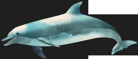 Ocean-Fish-PNG-Image