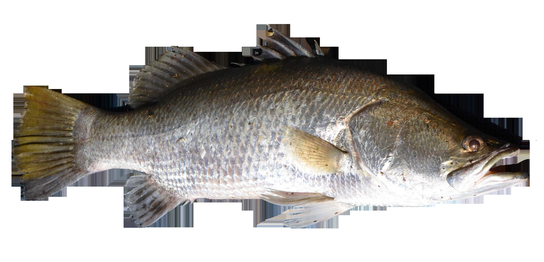 PNGPIX-COM-Fish-PNG-Transparent-Image-7