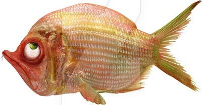 grumpy_fish_png_by_kingabritschgi-d8r48qf