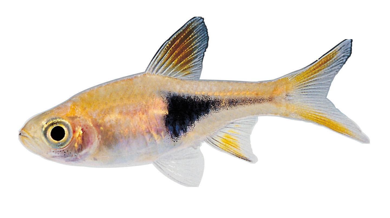 Real-Fish-PNG-HD