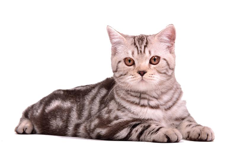 Cat-PNG-13