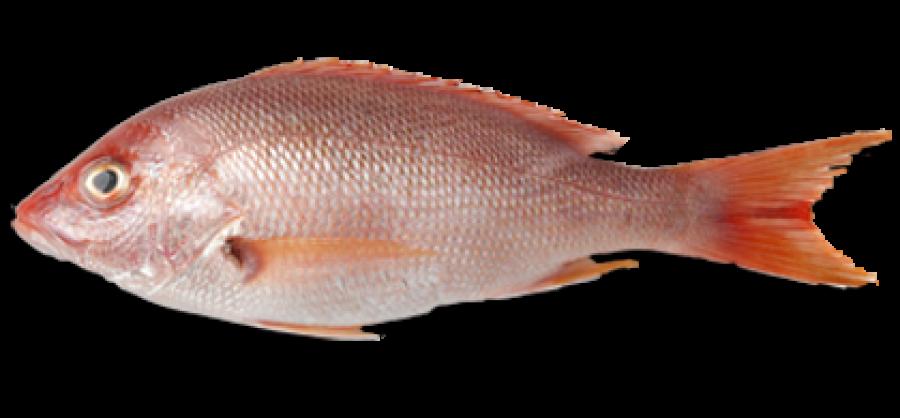 Fish-Meat