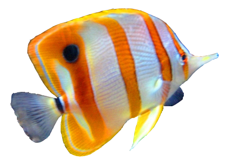 fish-png-10