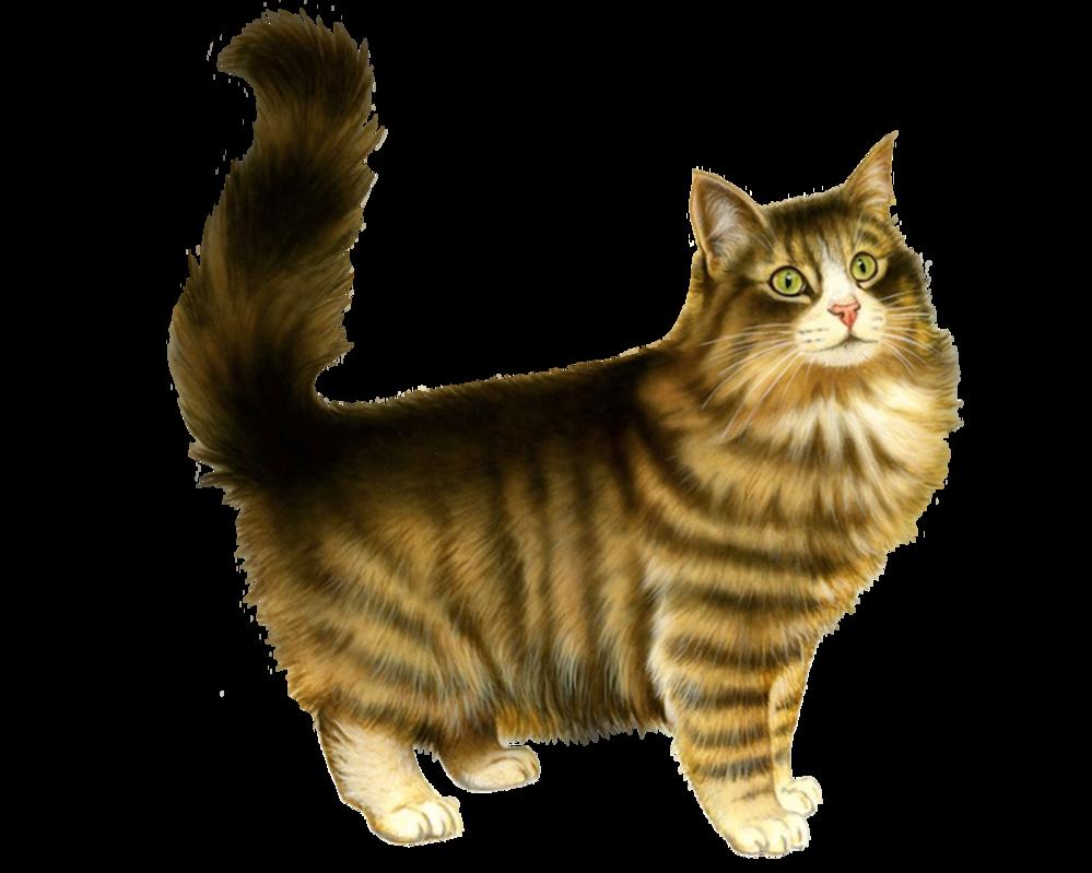 Cat-PNG-5