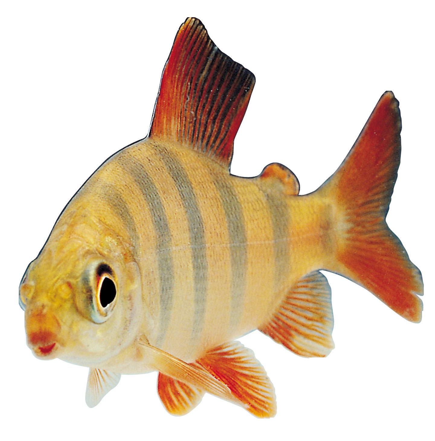 fish-png-4