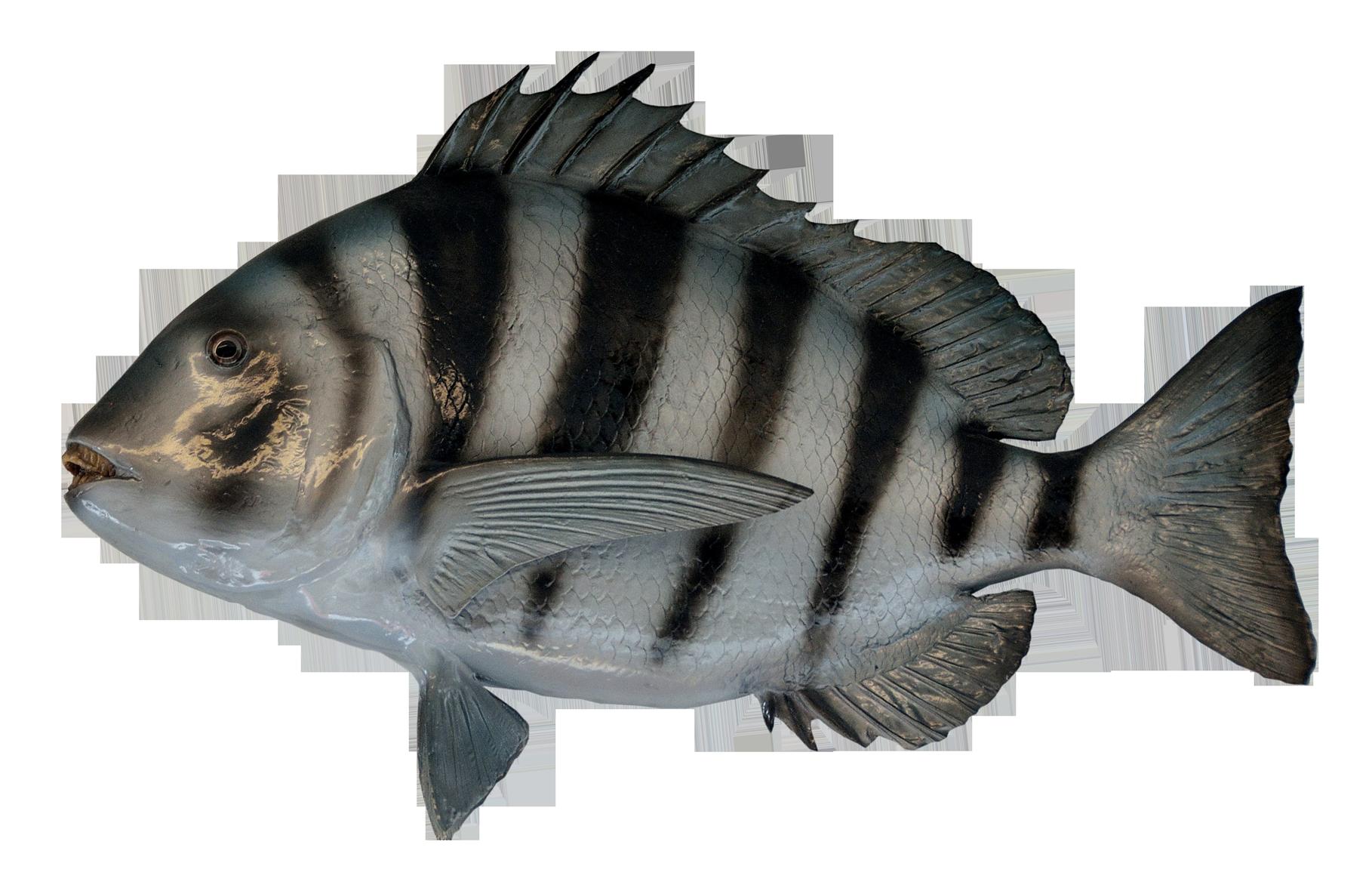 PNGPIX-COM-Fish-PNG-Transparent-Image