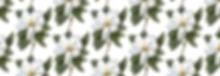 magnolia pattern-01.png