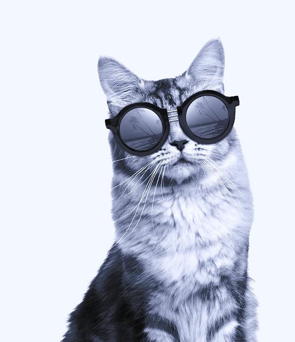 cat3_edited.jpg